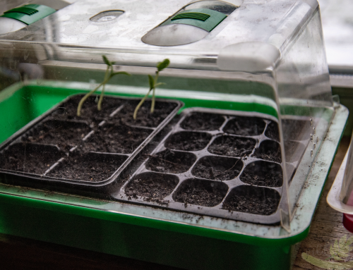Die Garten Saison beginnt – Gemüse aus dem eigenen Garten