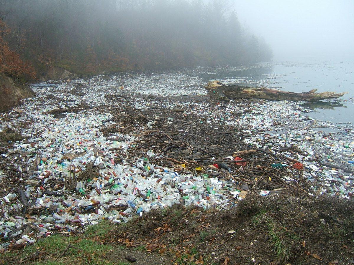 Plastikmüll am Wasser